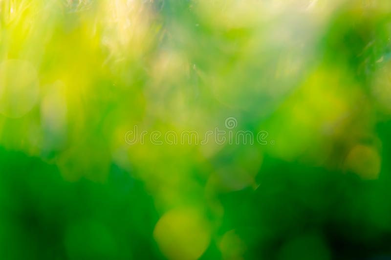 Blurred fresh green grass field in the early morning. Green leave with bokeh background in spring. Nature background. Clean. Environment. Green bokeh abstract stock image