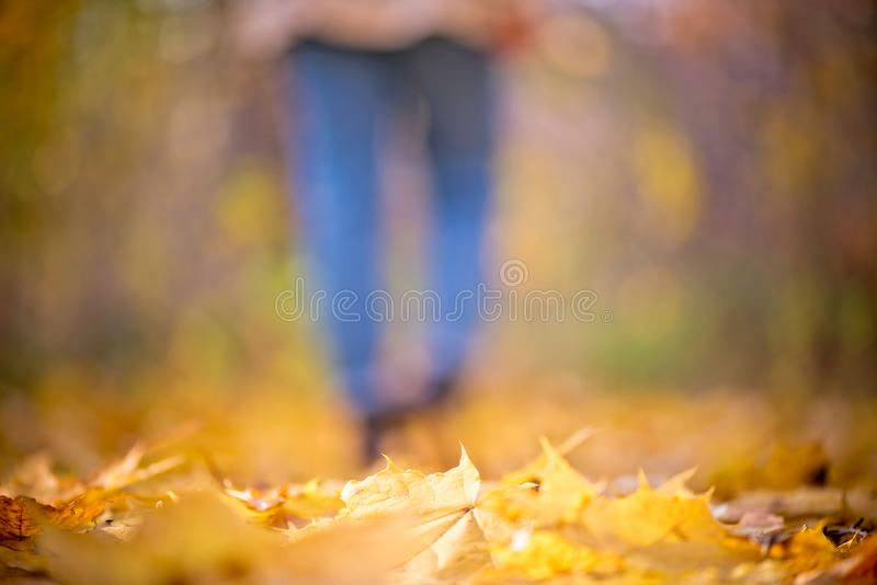 Blurred girl in jeans and boots walks in the autumn forest. Unfocused women`s legs in the Indian summer stock image