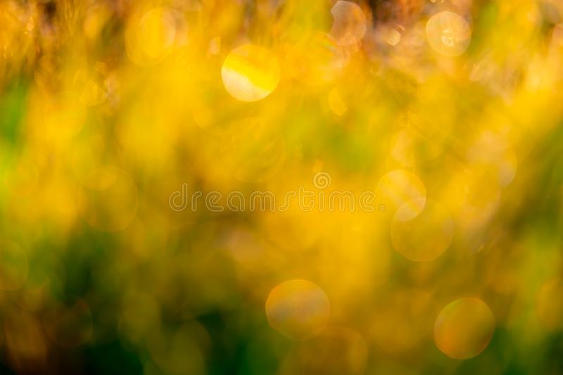 Blurred golden and green grass field in the morning with sunlight. Yellow bokeh background of sunshine in spring. Nature stock image
