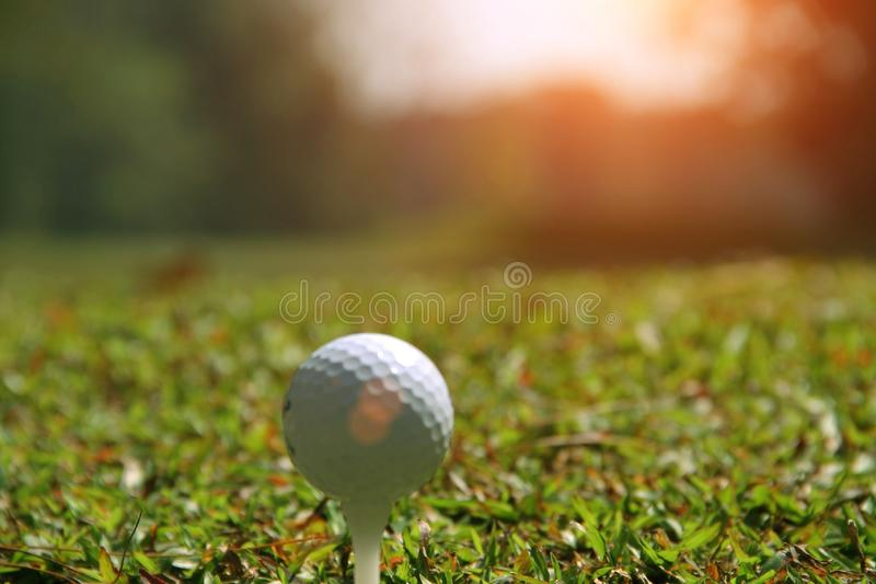 Blurred golf ball on green in the evening golf course. With sunshine in thailand royalty free stock photography