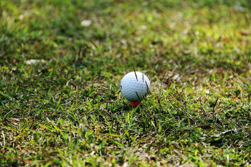 Blurred golf ball on green in the evening golf course. With sunshine in thailand stock image