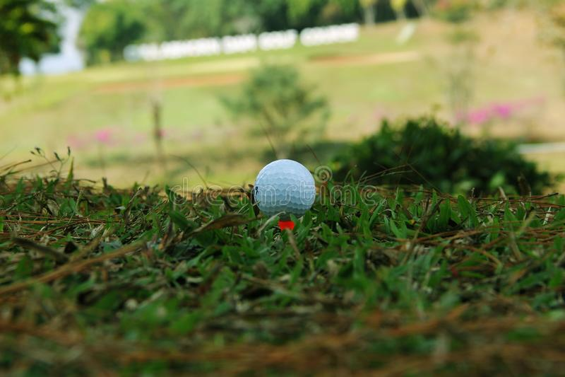 Blurred golf ball on green in the evening golf course. With sunshine in thailand royalty free stock photo