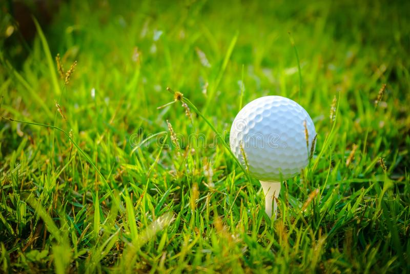 Blurred golf ball on tee in the evening golf course royalty free stock images