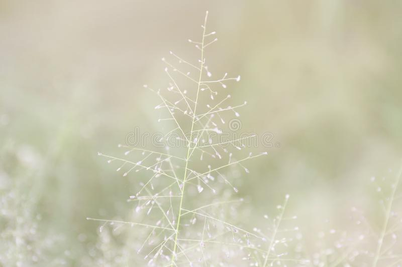 Blurred grass nature, soft grass flowers fresh for background, small grass meadow blur in sun light morning day, natural flower stock image