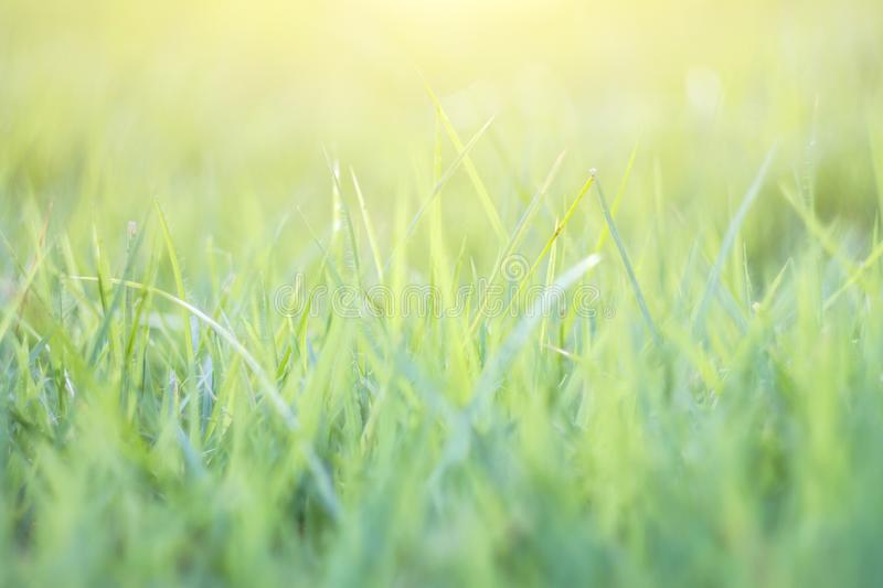 blurred grass out of focus tropical green grass field abstract background stock photography