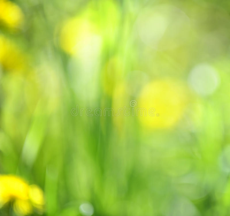 Download Blurred green background stock image. Image of dandelions - 27880779