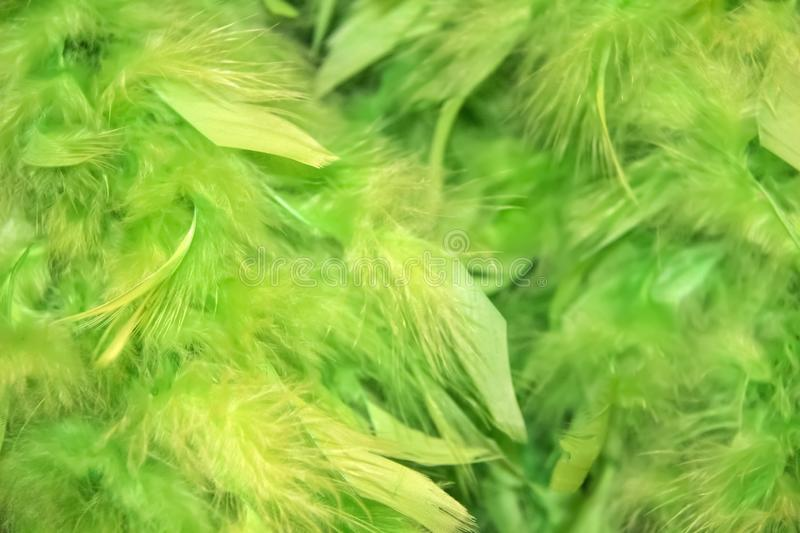 Blurred green fluffy feathery background with more blur on one side - room for copy royalty free stock images