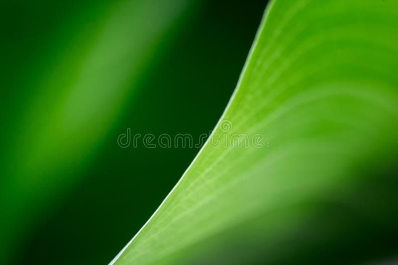 Blurred green leaf houseplant macro. elegance diagonal line between light and shadow. abstract modern minimalist pattern . empty s stock photo