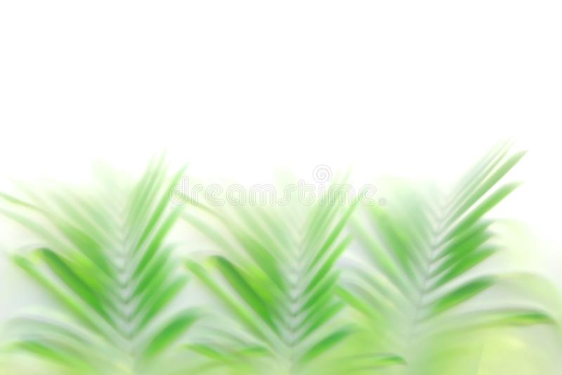 Blurred green palm leaves bokeh effect background, beautiful tropical nature backdrop royalty free stock photos