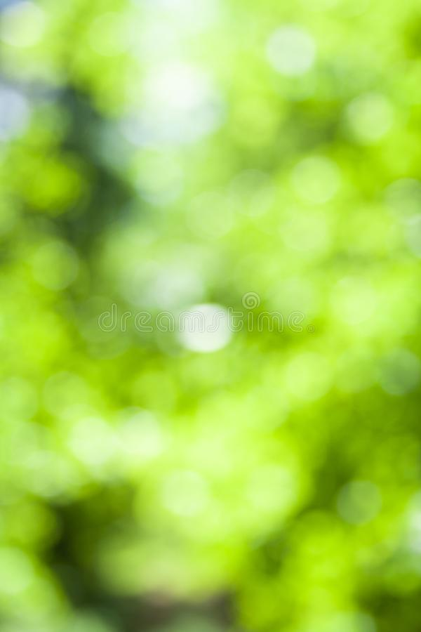 Blurred green and white forest colors of forest background. Forest focus backdrop stock photo