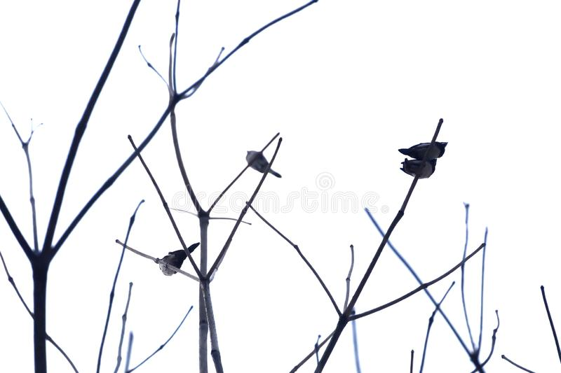 Blurred a group of Asian birds sitting on the leafless tree branch royalty free stock photos