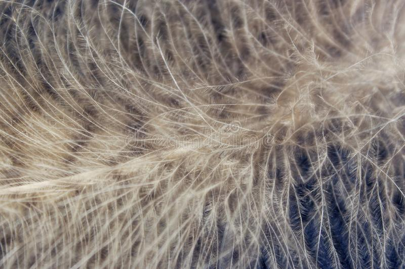 Blurred image of fluffy feather. Abstract nature background. royalty free stock photography