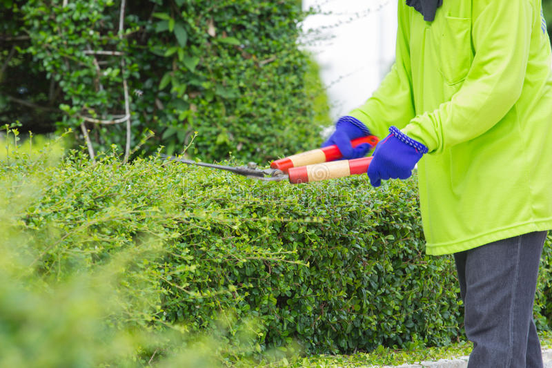 Blurred image of a man cutting green bush (motion blur image).  royalty free stock images