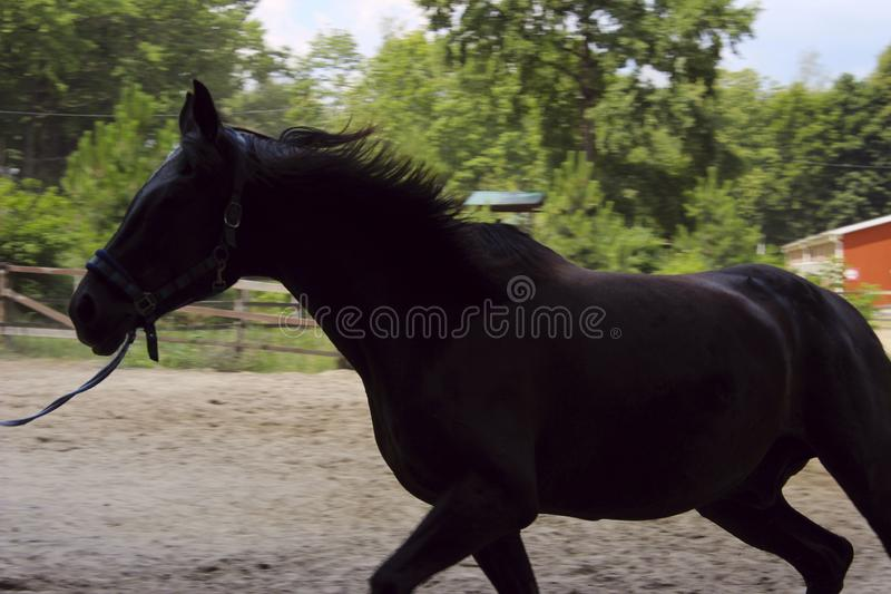 Blurred image of running horse, black and white. Cropped shot of a beautiful horse. royalty free stock images