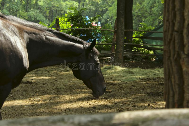 Blurred image of running horse. Cropped shot of a beautiful horse. stock photo