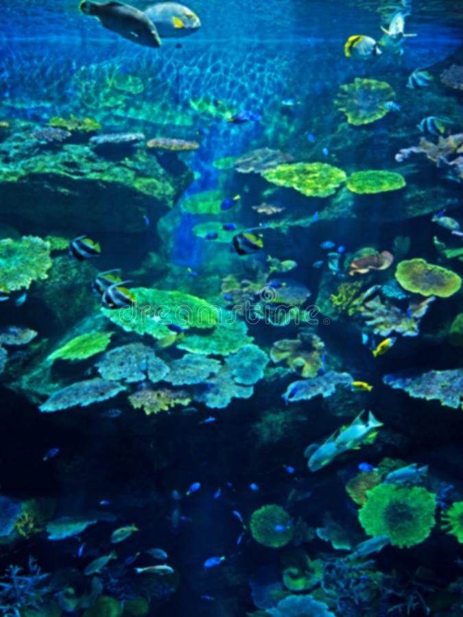 Blurred Landscape Scene of Undersea Coral Reef with Sea Fish Background stock photo