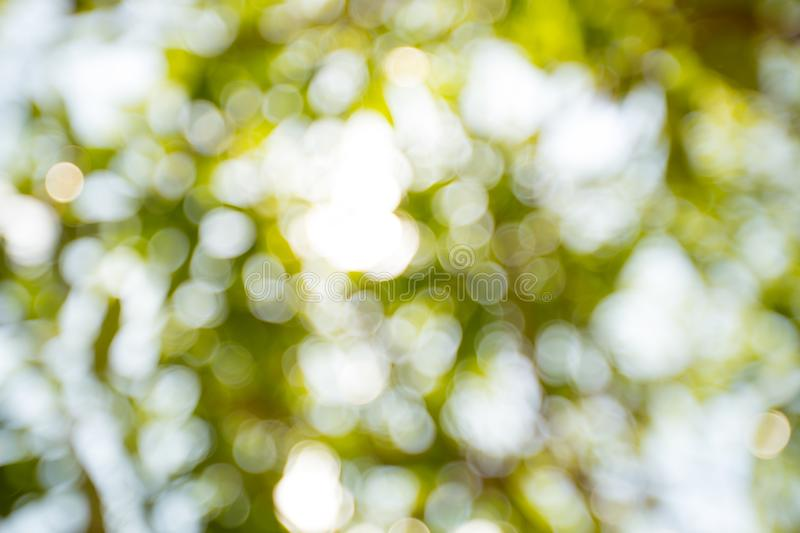 Blurred light bokeh and green bokeh from green tree. Image for background, wallpaper and cipy space royalty free stock images