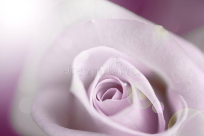 Blurred pale purple rose, vintage background. Blurred pale purple rose. vintage background. soft focus stock image
