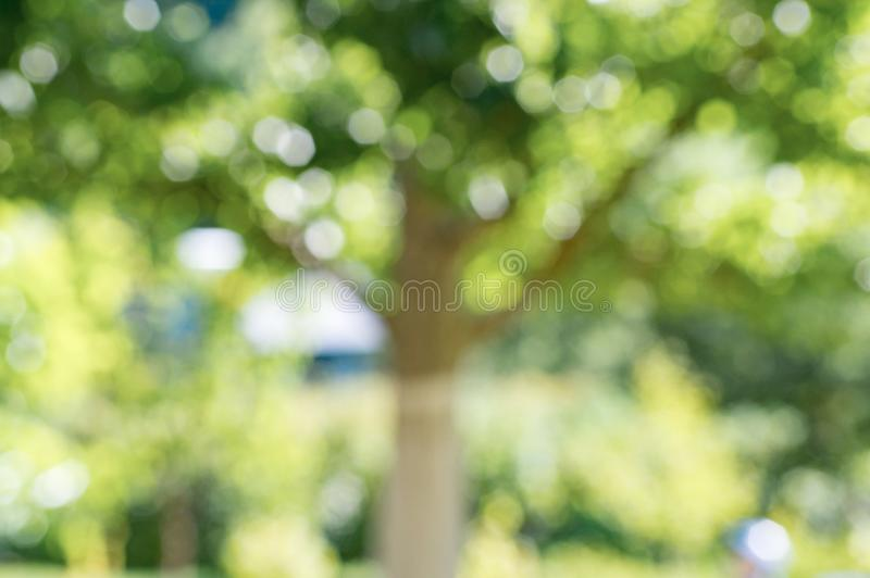 Blurred photo of an apple tree in the garden stock photo