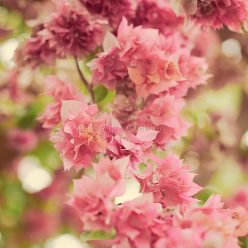 Blurred pink paper flower background. With bokeh royalty free stock photo