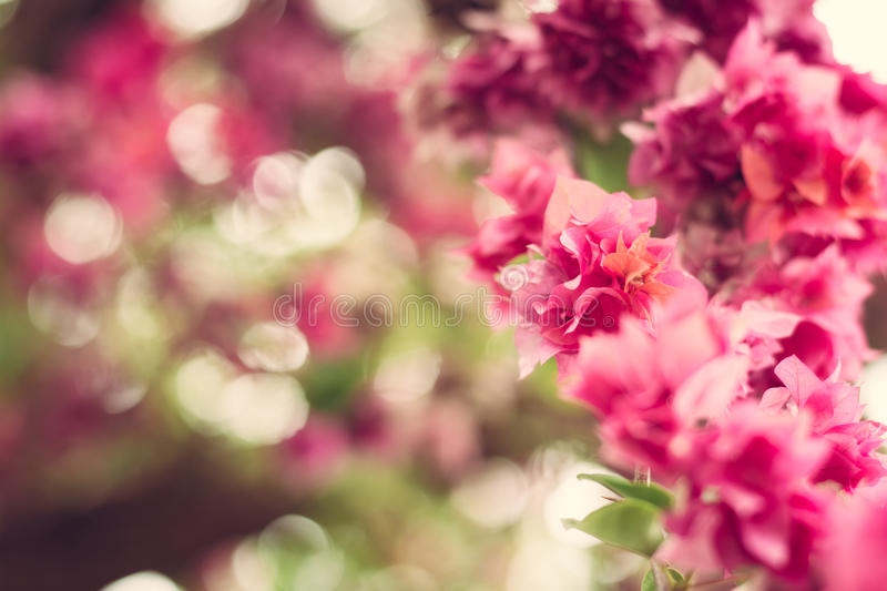Blurred pink paper flower background. With bokeh stock images