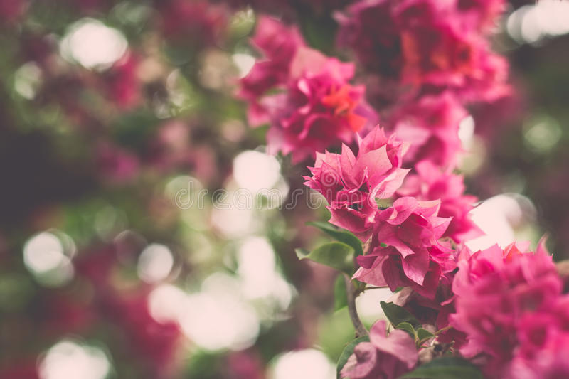 Blurred pink paper flower background. With bokeh royalty free stock image