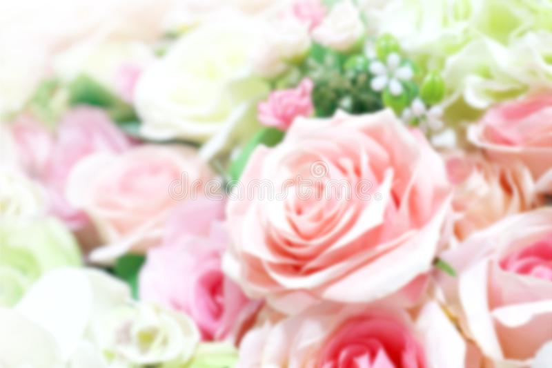 Blurred rose pink soft bouquet for background, roses flower blurry pink color pastel, rose sweet color blur stock image