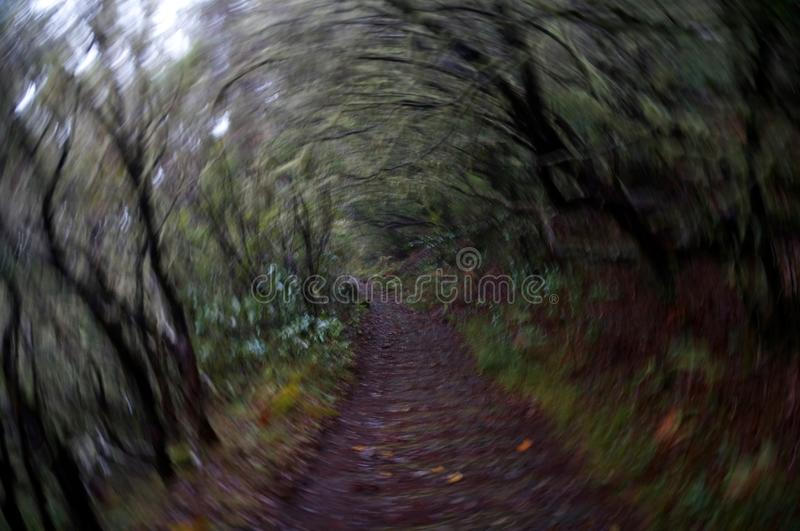 Blurred rotation: Trail through a dark wet forest. With focus on the trail, the surrounding vegetation is circularly blurred. The forest is dark and wet after
