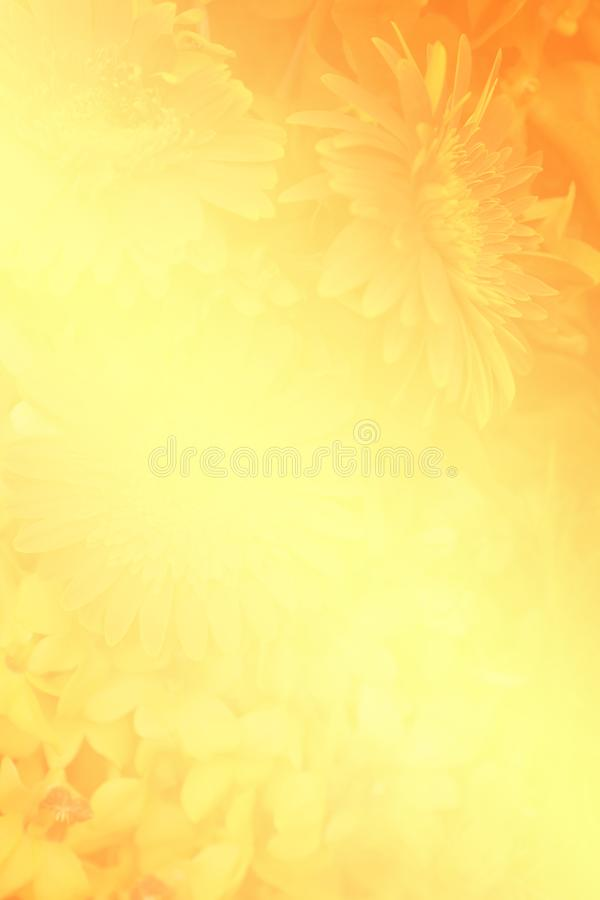Blurred shadow of flower on bright yellow and orange vivid color bcakground royalty free stock images