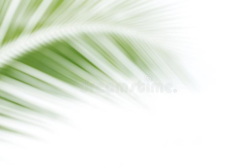 Blurred soft of leaves coconut palm tree green nature beautiful on white background coconut, blur leaves bush coconut palm tree royalty free stock image