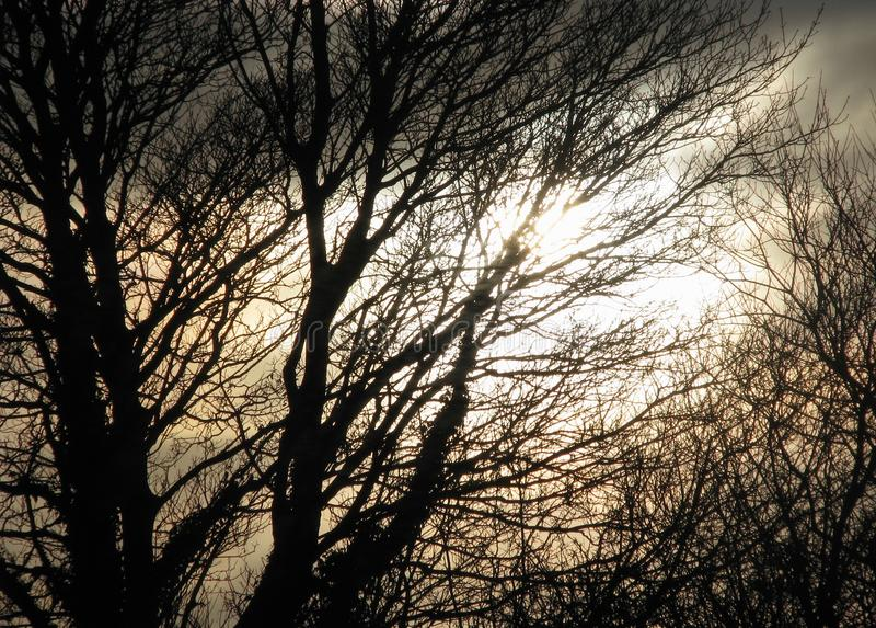 Blurred spooky background of silhouetted trees and stormy sky. Blurred background of silhouetted trees against a bright sepia stormy sky at dusk in the winter royalty free stock photos
