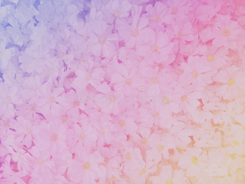 Blurred of sweet flowers in pastel color style on soft blur bokeh texture for background.  royalty free stock photography