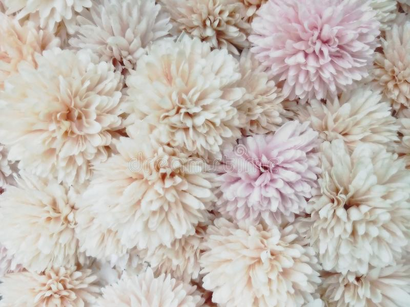 Blurred of sweet flowers in pastel color style on soft blur bokeh texture for background.  stock photos