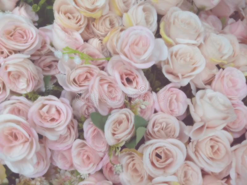 Blurred of sweet roses in pastel color style on soft blur bokeh texture for background.  stock images