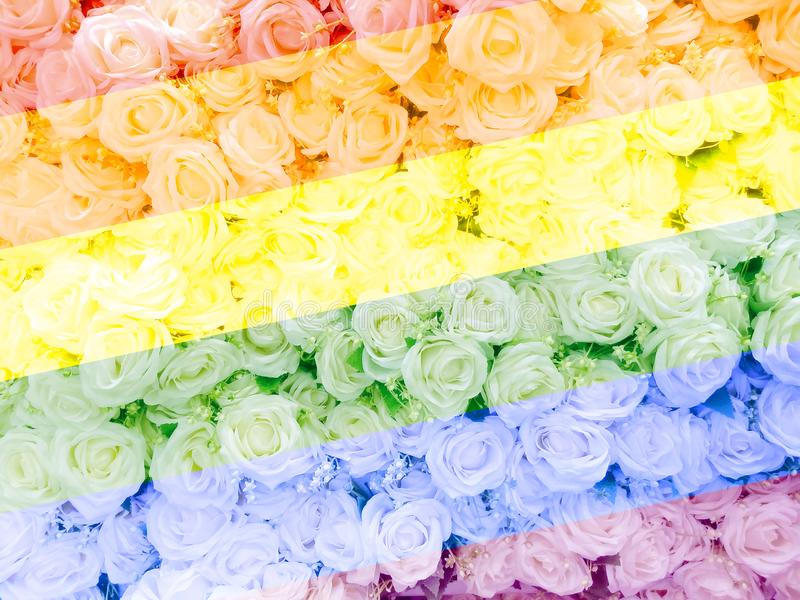 Blurred of sweet roses in Rainbow color style on soft blur bokeh texture for background.  royalty free stock photos