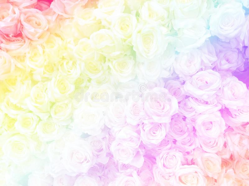 Blurred of sweet roses in Rainbow color style on soft blur bokeh texture for background.  royalty free stock images