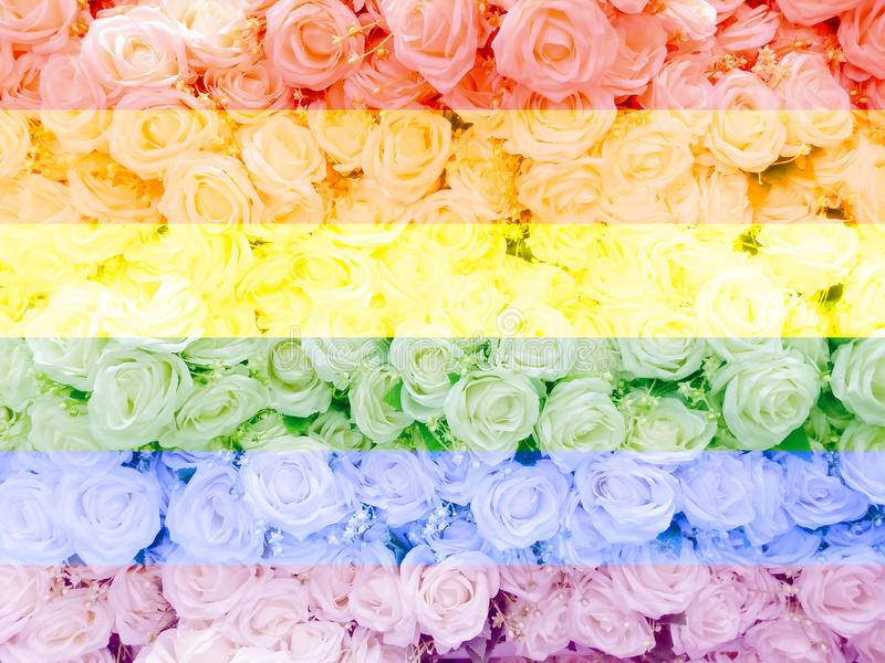 Blurred of sweet roses in Rainbow color style on soft blur bokeh texture for background.  royalty free stock photography