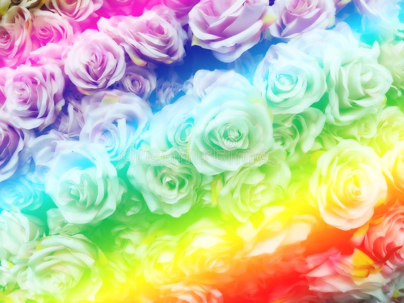 Blurred of sweet roses in Rainbow color style on soft blur bokeh texture for background.  stock image