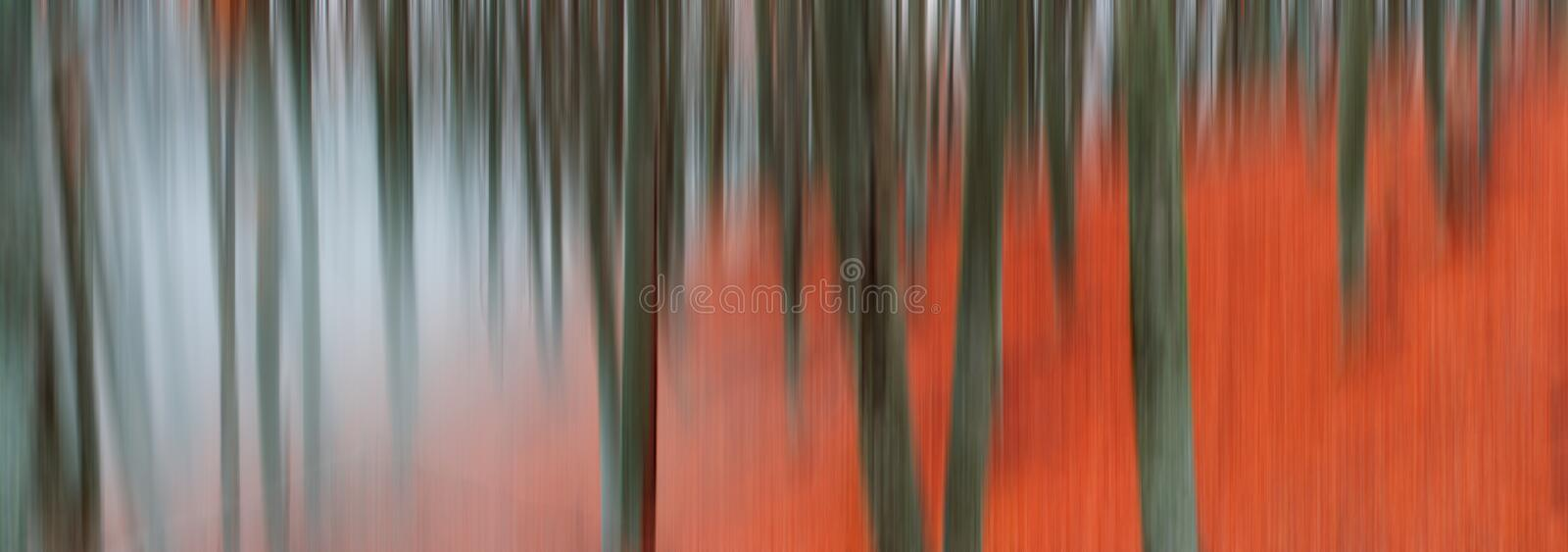 Blurred tree trunks royalty free stock image