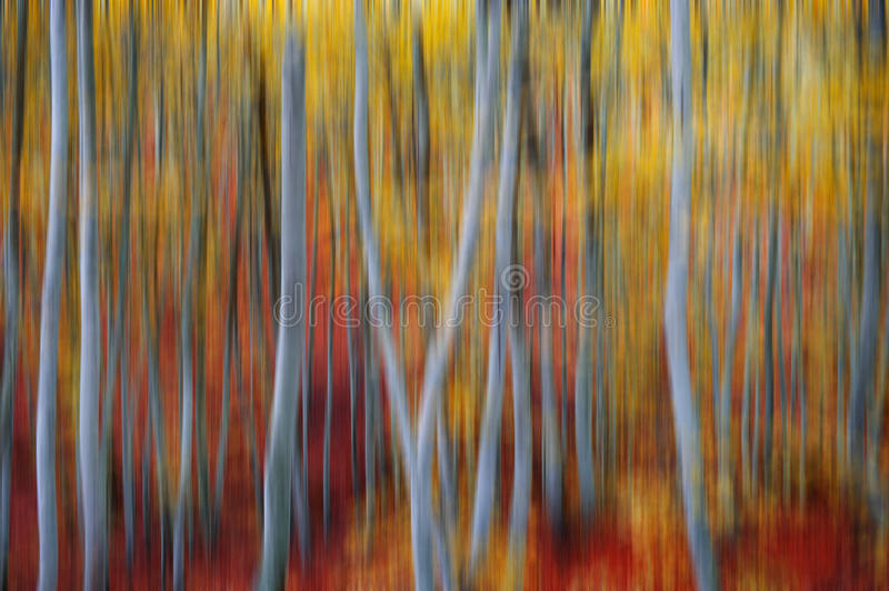 Blurred tree trunks. View of a blurred beech forest during autumn season royalty free stock photography