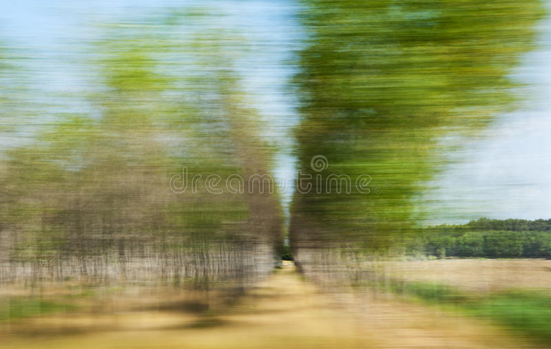 Download Blurred trees stock photo. Image of fast, summer, trees - 20916192