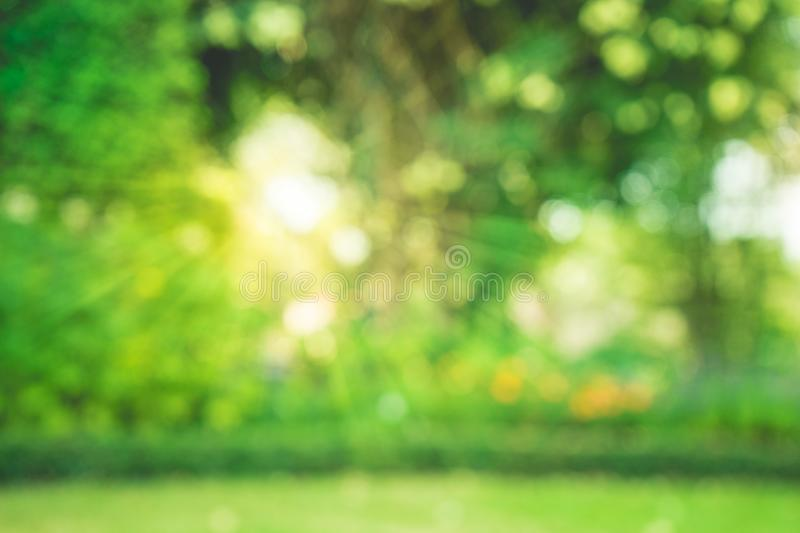 Blurred of trees bokeh in garden morning background. Spring summer season or green concept ideas royalty free stock images