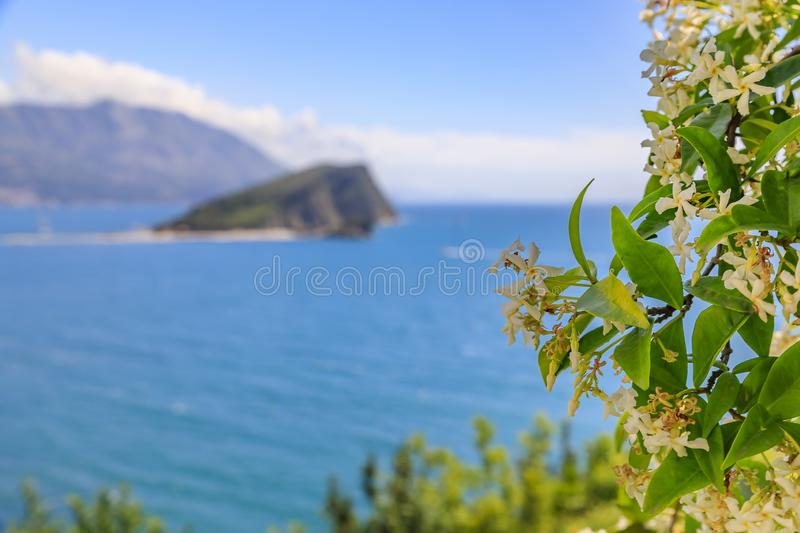 Blurred view of Island of St Nicholas or Hawaii in the Adriatic sea near Budva Montenegro with jasmin in the foreground. Artistically blurred view of Island of stock photography