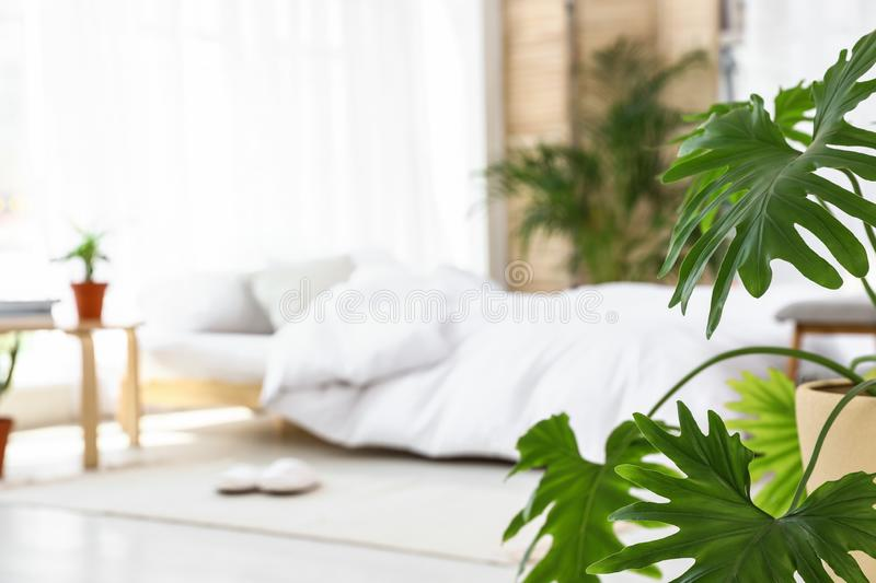 Blurred view of trendy bedroom interior, focus on monstera leaves stock images