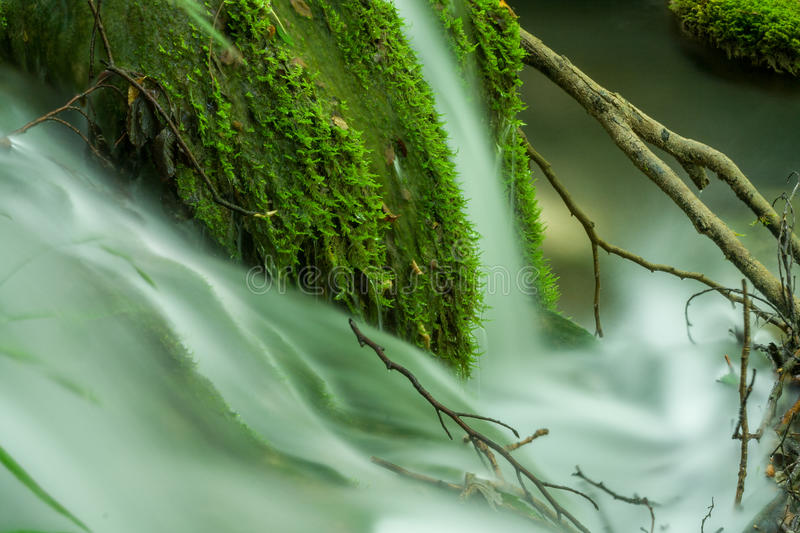 Blurred water flowing between tree branches royalty free stock photo