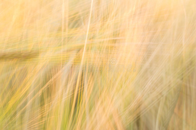 Blurred yellow abstract background with a predominance of lines royalty free stock photo