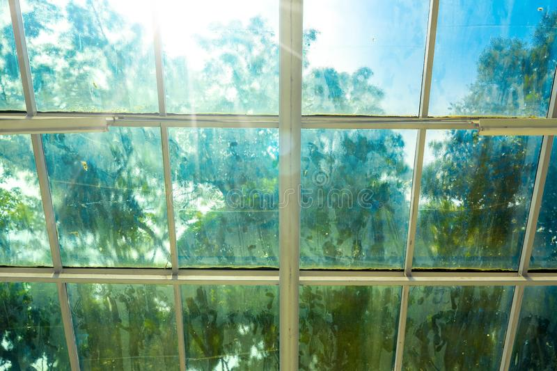 Blurry Dirty Film Coated Windows on Hot Sunny Day with Out of Focus Tree and Garden. Looking Outside from Inside of Green House royalty free stock photography