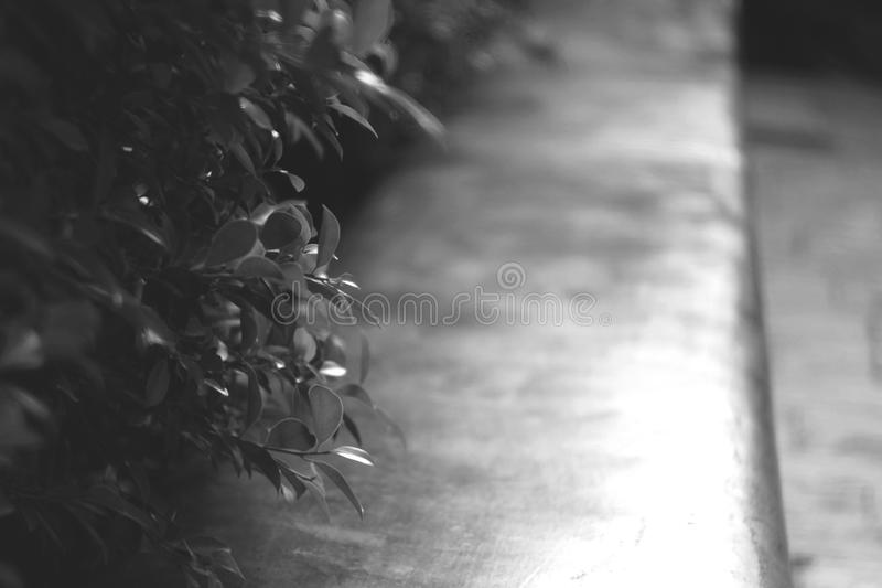 Blurry dreamy bush branch fresh little tree leaves with background of stone sitting bench seat in the play yard garden stock images