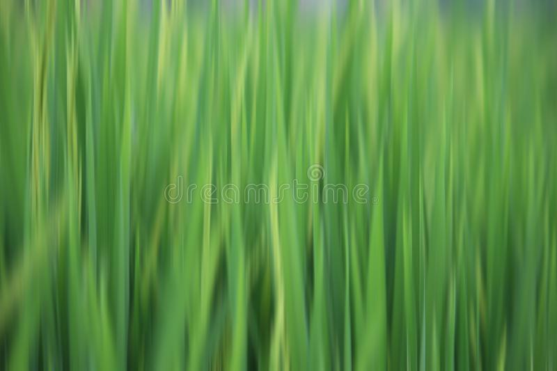 Vector illustration backdrop. Blurry green background. Abstract texture backgrounds. Fabric natural green motif vertical line royalty free stock image