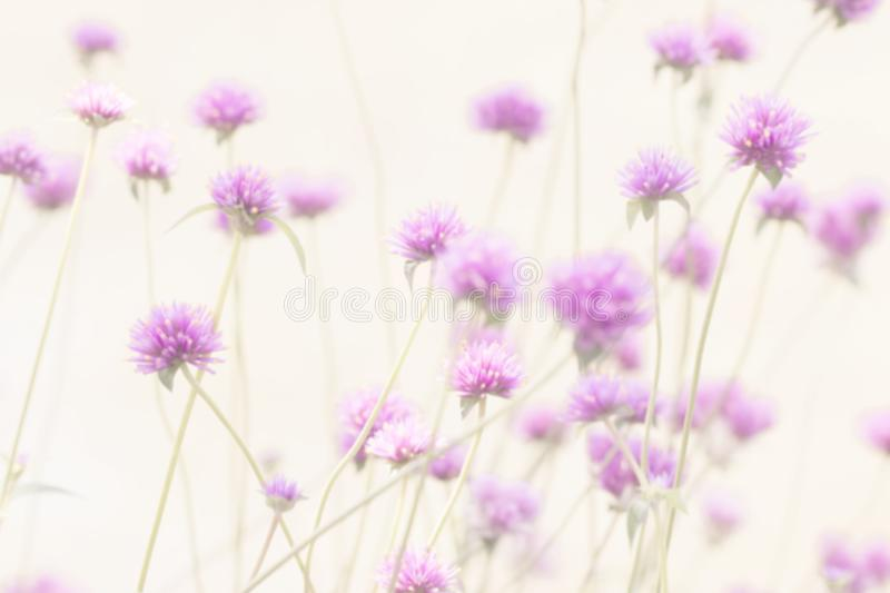 Blurry pink flowers for background and backdrop. royalty free stock images